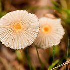 Mushroom Blooms by Scott  Hafer