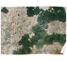 mold on baseboard  Poster