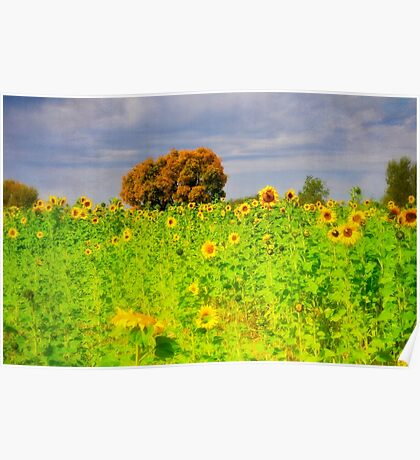 Rigby Idaho - Dreaming Of Sunflowers Poster
