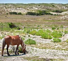 Alone grazing the dunes by Owed to Nature