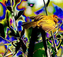Taveta Golden Weaver by TheBrit