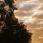 Rippling Sky Amongst the Eucalyptus by CatherineWinter