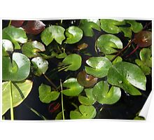 I Love Water Lilies Poster