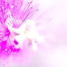 Violet Eruption by Peyton Duncan