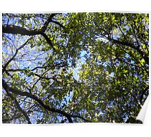 Upward View Of Trees Poster