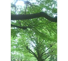 Roof made of leaves Photographic Print