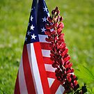 Lupine and Flag by Jonice