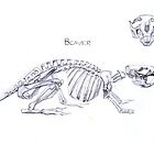 Beaver Skeleton by Marcus  Gannuscio