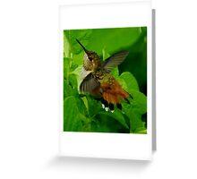 HUMMINGBIRD BATH TIME Greeting Card