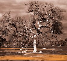"""""""One Fine Tree"""" by Heather Thorning"""