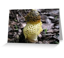 Stink Horn Greeting Card