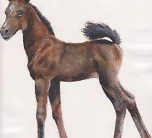 foal by cdgarciamejia