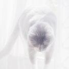 Heavenly Cat © Vicki Ferrari Photography by Vicki Ferrari