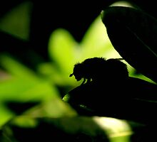 So hot, even the bees are finding shade by Deborah Durrant
