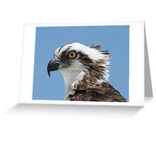Osprey portrait Greeting Card