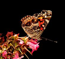 MONDAY BUTTERFLY by RoseMarie747
