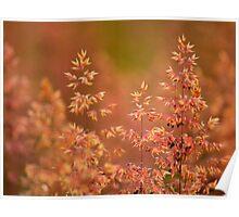 Seeding Rye Grass, Darlington, County Durham, Poster