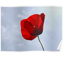 Poppy Blowing in the Wind Poster