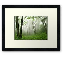 Trees in the mist Framed Print