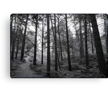 St Catherines' Hill III Canvas Print