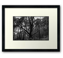 St Catherine's Hill II Framed Print