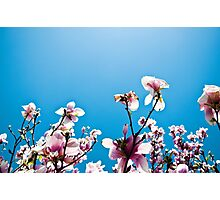 spring has sprung. Photographic Print