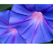 Morning glory twins Photographic Print