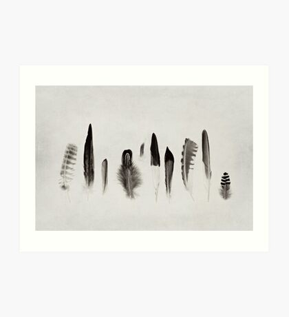 Feather Study no. 3 Art Print