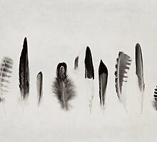 Feather Study no. 3 by Bethany Helzer