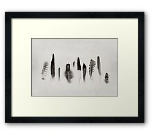 Feather Study no. 3 Framed Print