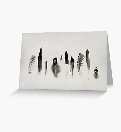 Feather Study no. 3 Greeting Card