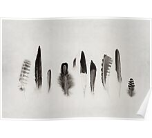 Feather Study no. 3 Poster