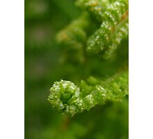 delicate green fern Photographic Print