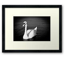 Graceful swan Framed Print