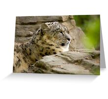 snow leopard soaking up the sun Greeting Card