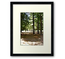 The Forest at Lac Philippe, Quebec, Canada Framed Print