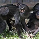 playful baby chimps  by Evette Lisle