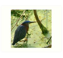 Tropical Bird in Pond, Seminole Park, Largo Art Print