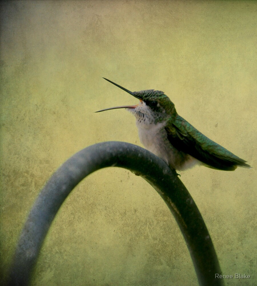 Hummingbird Talk  by Renee Blake