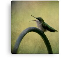 Hummingbird Talk  Canvas Print