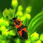 Red and Black Beetle by mhm710