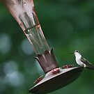 Happy Little Hummingbird by ClickOfOdds