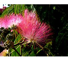 All Fluff & Feathers Photographic Print