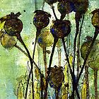 Poppy Seed Heads by Val Spayne