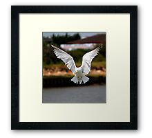 I want to  be an Eagle  Framed Print