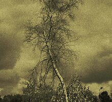 The Birch by Mitch Labuda