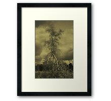 The Birch Framed Print