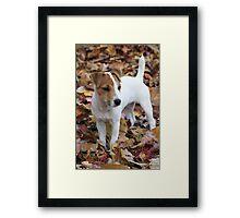 Jack In The Leaves Framed Print