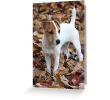 Jack In The Leaves Greeting Card