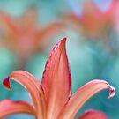 Fleur de Lys II by Maria Ismanah Schulze-Vorberg